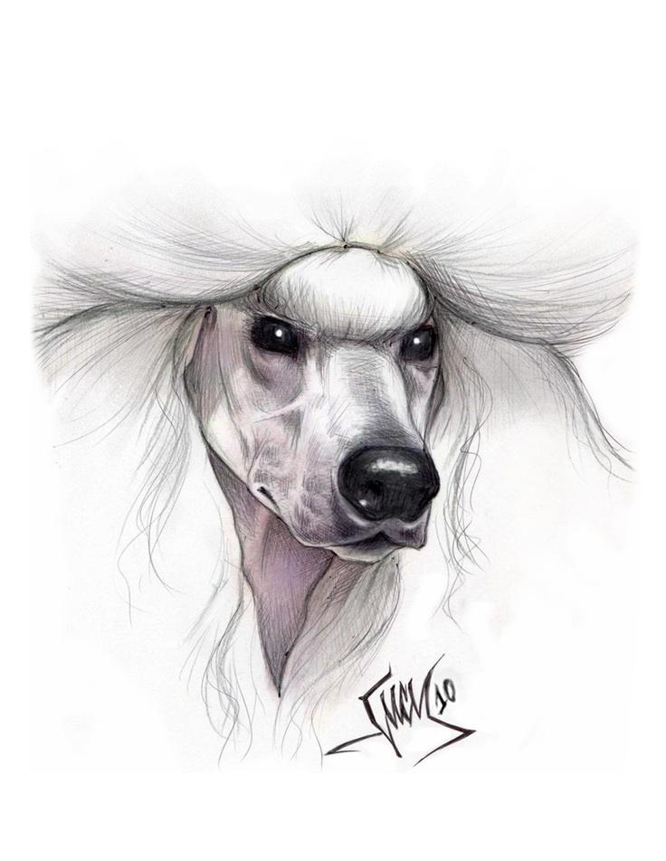 Lucy Tyler Lucydogdesign