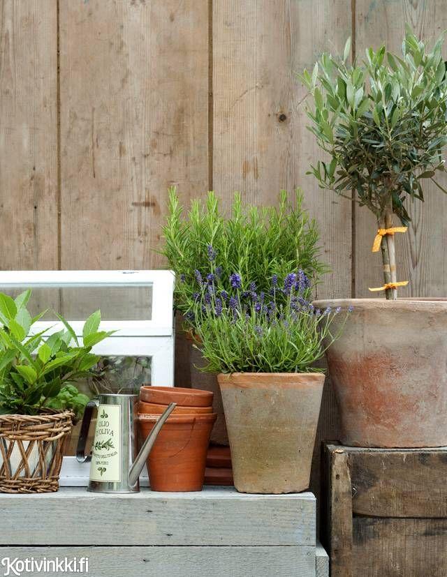 Yrttien kasvatus – valitse suosikkisi ja kasvata siemenestä tai taimesta | Kotivinkki