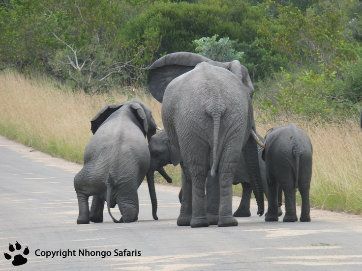 Herd of elephants 2
