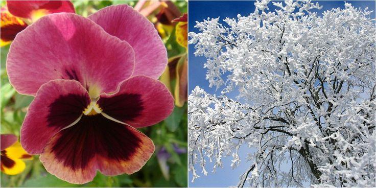 Qué plantas elegir para zonas frías y de frío extremo
