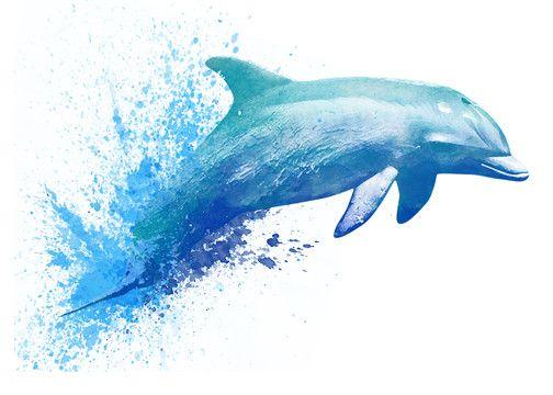 Dolphin watercolor