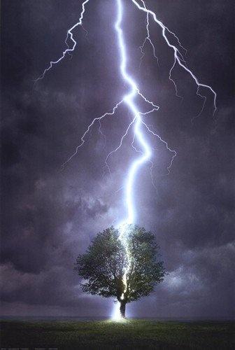 Lightning Striking a Tree - Amazing!