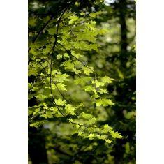 25+ parasta ideaa: baum blätter pinterestissä | baum ohne blätter ... - Baum Interieur