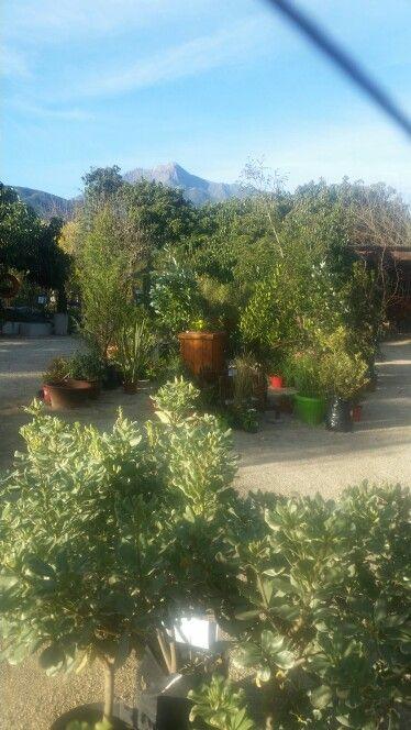 Me encantas Jardín Mykonos...Olmue- Chile