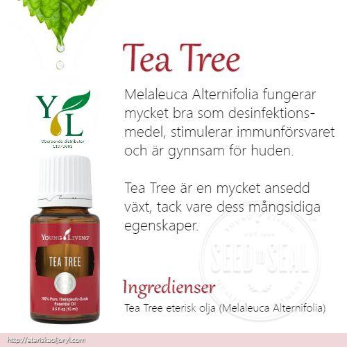 Tea Tree (Melaleuca Alternifolia)eterisk olja fungerar mycket bra som desinfektionsmedel, stimulerar immunförsvaret och är gynnsam för huden.   Tea Tree är en mycket ansedd växt, tack vare dess mångsidiga egenskaper.