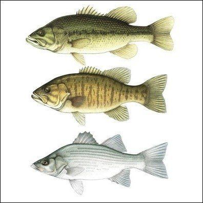 Different Types of Bass