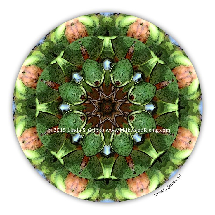 Joyous Spin by Linda S. Gribko | Nature Mandala | Spiritual Art | Meditation Art | Greeting Card  | Green Mandala | Energy of Exuberance and Celebration | Mandala Art | Mandala Card | Mandala Greeting Card