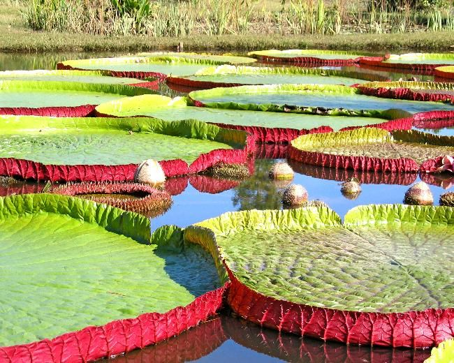 Kenilworth Aquatic Gardens - http://www.nps.gov/keaq/index.htm  Mid- to late-May is an ideal time to visit.