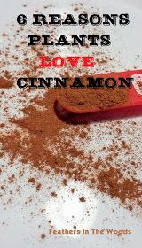 Using cinnamon in gardening & in the house.  Keep out ants & kill potted plant gnats.