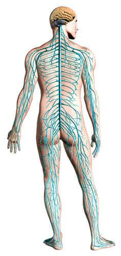 Neuropathy, the pain of nerve damage and what can be done about it