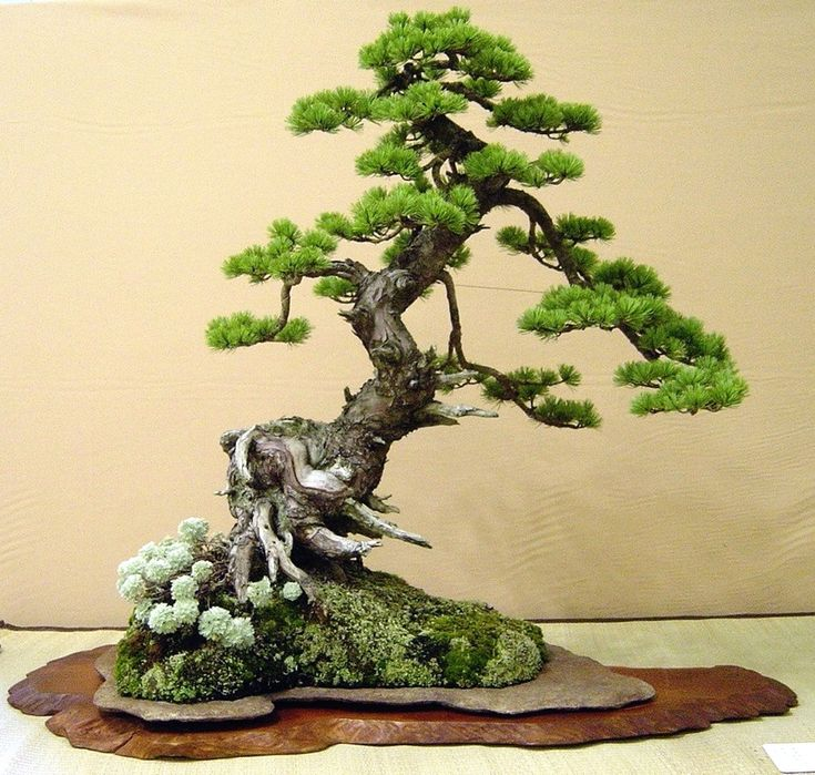 (Hira=ぼんさい) bonsai art form which originated in China and was perfected in Japan