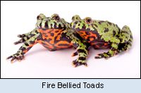 There are nearly 4,000 types of frogs, including toads, which are in the frog family, in almost every part of the world.