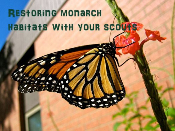 Restoring monarch butterfly habitats with your Girl Scout troop. Great camp or outdoor activities to help your kids take an active role in preserving the monarch butterfly.