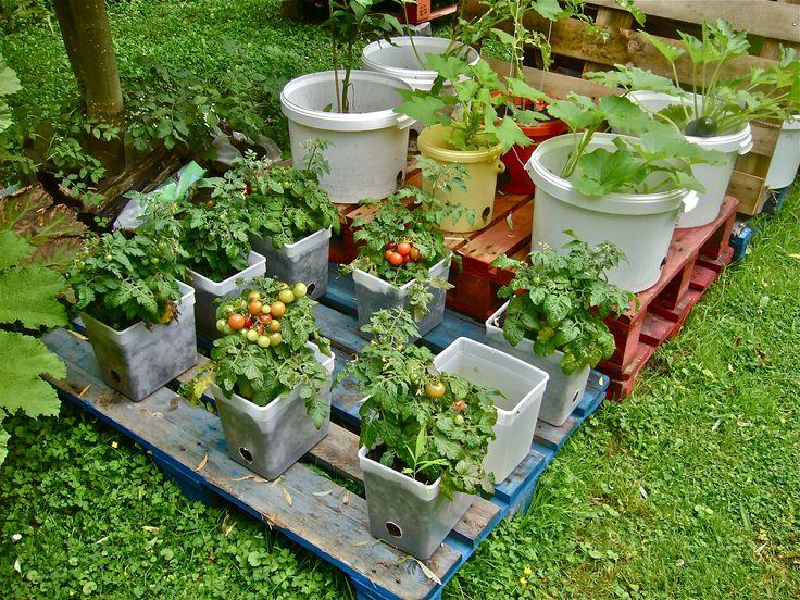 unusual container gardens container gardening