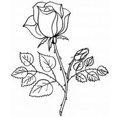 Coloriage Rose a Imprimer Gratuit