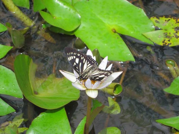 Meet some beautiful butterflies. #nature #plantation #flowers #jungle #beautiful #amazing #beauty #summer #spring #paradise #bali #island #islandofgod #travel #holiday #vacation #explorebali #hotel #resort #luxury #butterfly