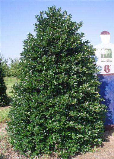 Christmas Tree Farms California