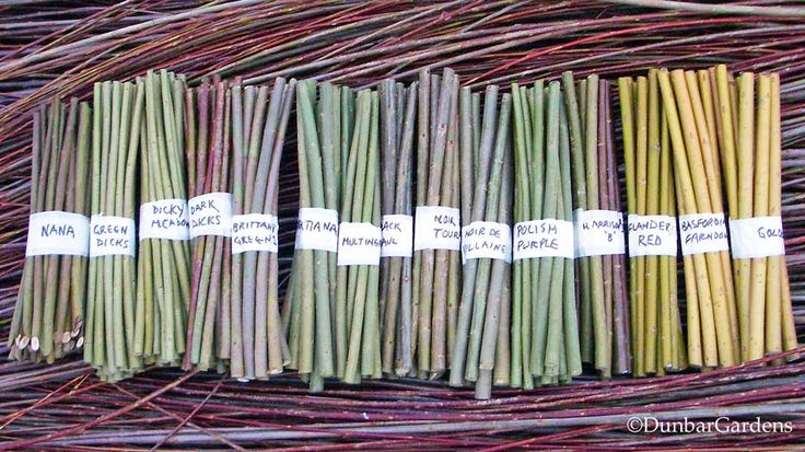 The benefits of the various varieties of willow. Nine out of ten willow cuttings will take root when you stick it into some dirt.