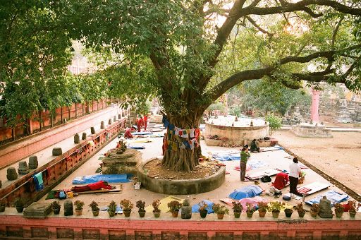 Bodhi Tree bihar