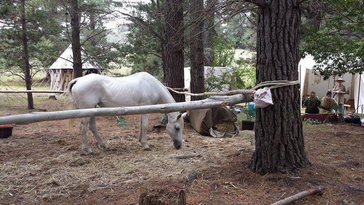 Horses at NEMAS Gathering 2016 by Isabel Robinson