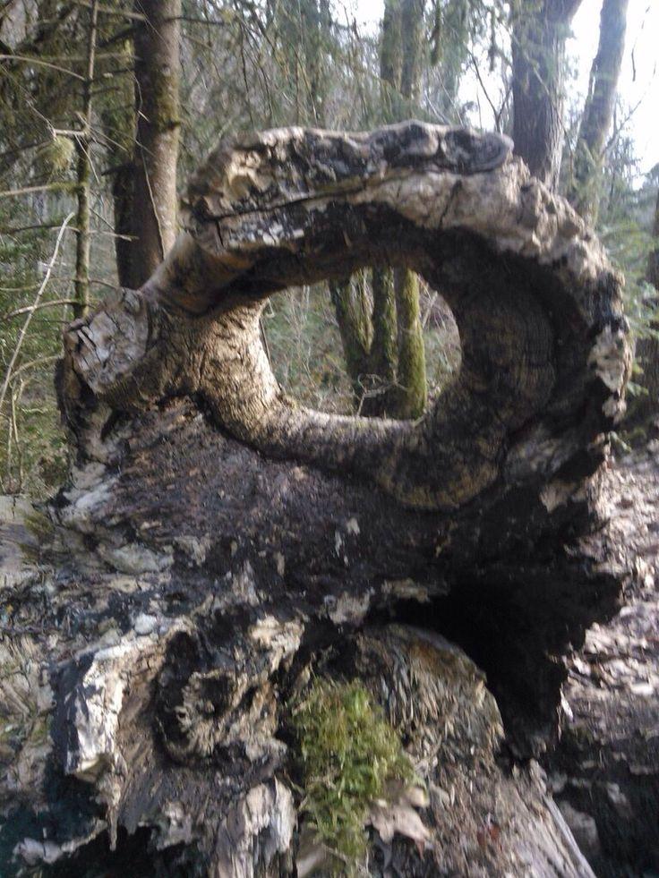Les 119 meilleures images propos de souches racines sur pinterest arbres grottes et andy - Souche d arbre decorative ...