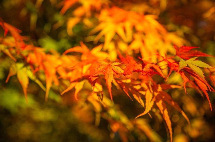 Happy Monday! Enjoying the autumnal colours before winter sets in  . . . . #outdoorslife #thegreatoutdoors #naturephoto #getoutdoors #itsamazingoutthere #outdoorliving #autumnlove #autumntrees #autumnwalks #simplelife #theartofslowliving #littlestoriesofmylife