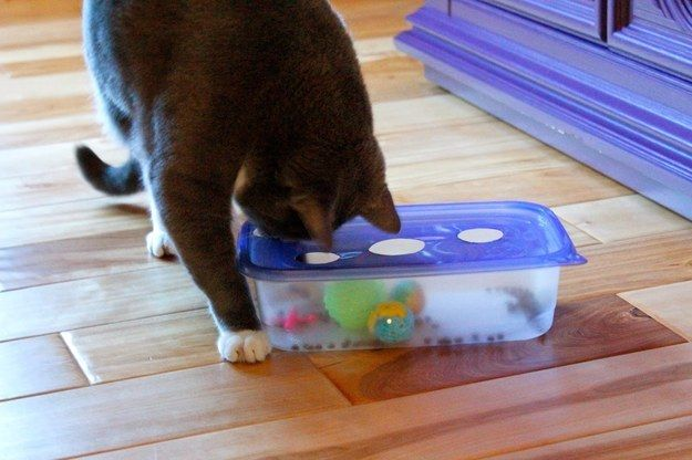 Keep cats busy for hours with this DIY Tupperware cutout puzzle. | 26 Hacks That Will Make Any Cat Owner's Life Easier