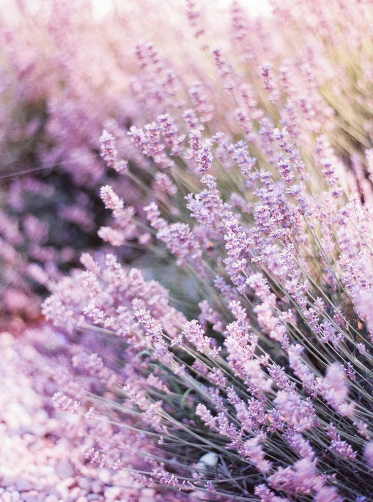 #lavenderPhotography: Birgit Hart Fotografie - birgithart.comRead More: http://stylemepretty.com/2013/10/23/koblenz-germany-wedding-from-birgit-hart-fotografie/