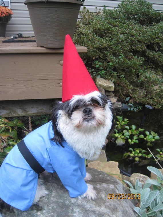 10 Best Ideas About Dog Halloween Costumes On Pinterest Dog Costumes Diy Dog Costumes And Pet