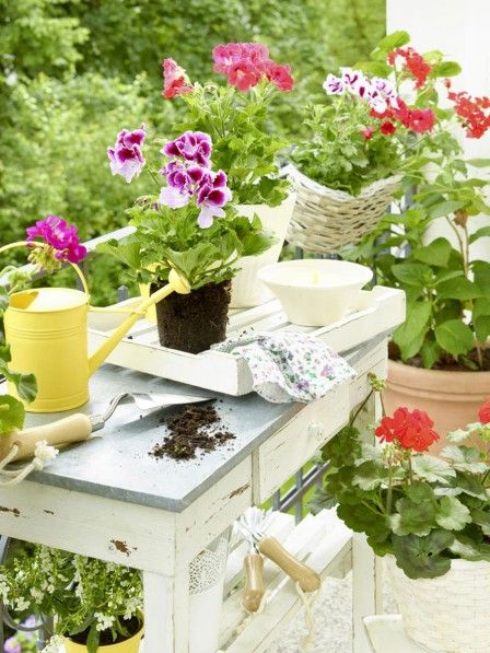 Die 25+ Besten Ideen Zu Blumenerde Auf Pinterest | Container ... Gemuse Im Blumentopf Tipps Pflege