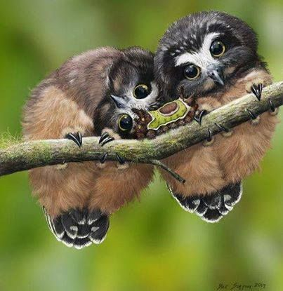 Baby Owls face-to-face with a caterpillar