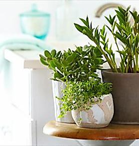 Les 6 meilleures plantes pour la salle de bain