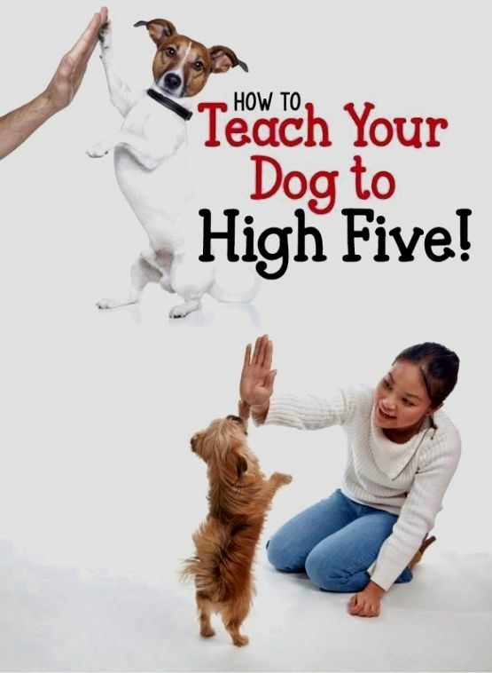 Dog Training Guide Every Single Interaction That Can Take Place