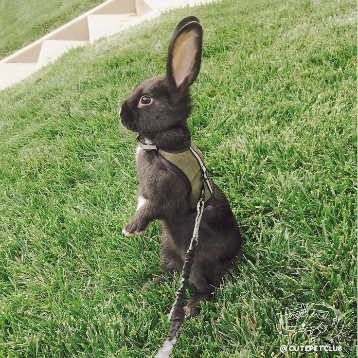 From @lennonthebunny: Mom why are my ears bigger than yours?? (me as a baby) #cutepetclub [source: http://ift.tt/2nTS84v ]