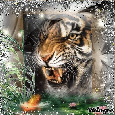 Blingee Tigers | sibirischer tiger tags glitzer tier tiger