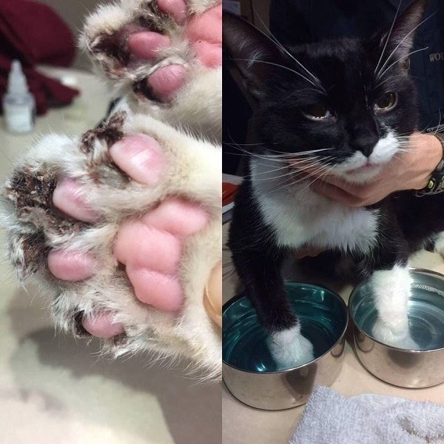 Declawed Kitten Almost Gets Euthanized Due To With Images Declawing Cats Baby Cats Stupid Cat