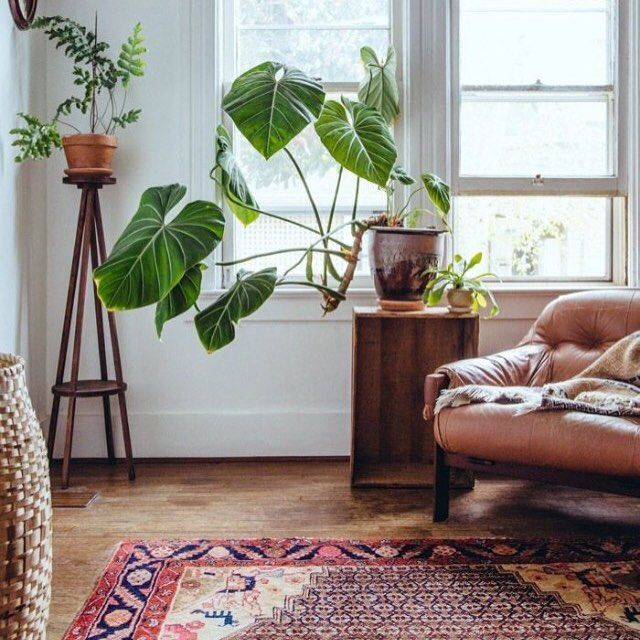 rug and plant