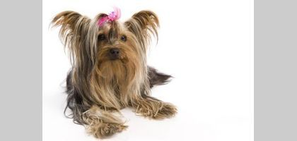 Good Dogs for Kids That Don't Shed | eHow