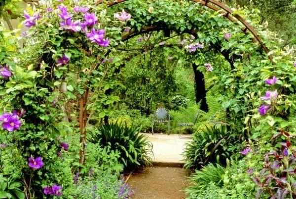 10 plantas trepadoras para pérgolas/cenadores. Clematis. Guía de Jardín.