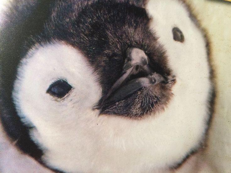 Cute baby pinguïn!!