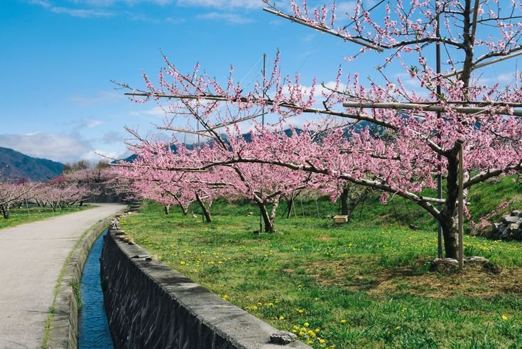 What to Do in Yamanashi Prefecture