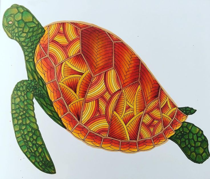 Millie Marottas Turtle From Tropical Wonderland Using Copic Markers