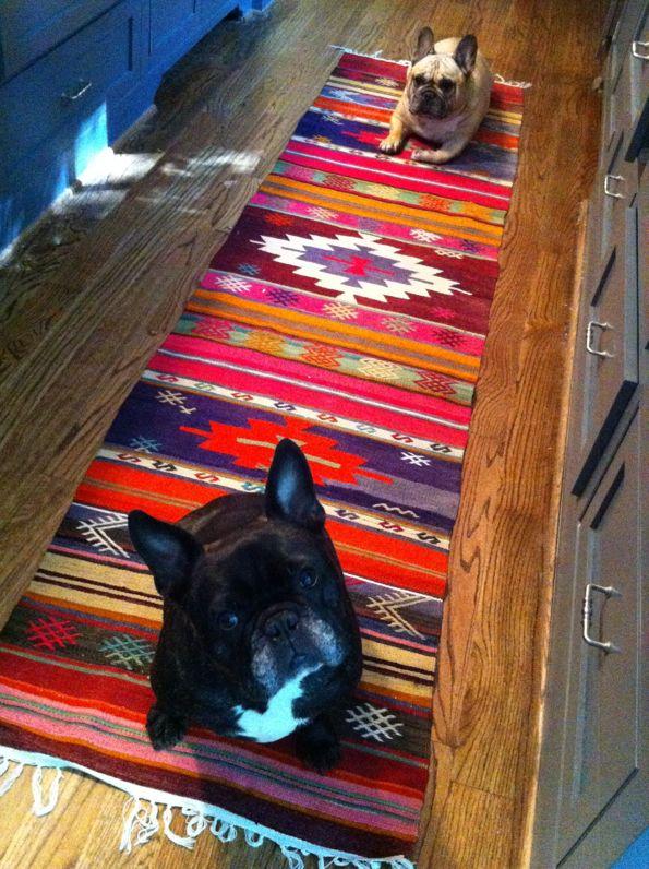 Colorful kilim rug and cute faces :)