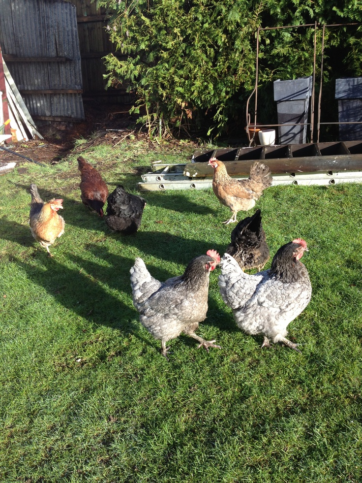 Staff meeting! Daisybank Cottage New Forest