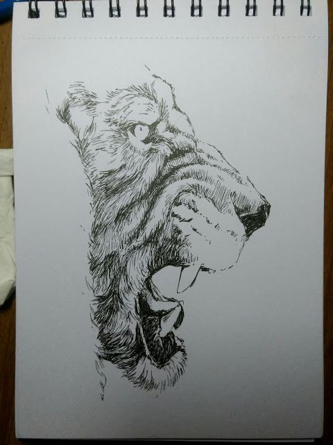 Sketch a day #13   2d inktober lion sketch