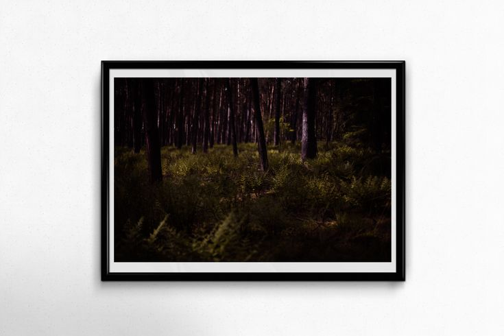 Fine Art Poster Print: Forest Secrets —– wall art – photography – woods – forest – dark – dark forest – deep forest – magical – fern