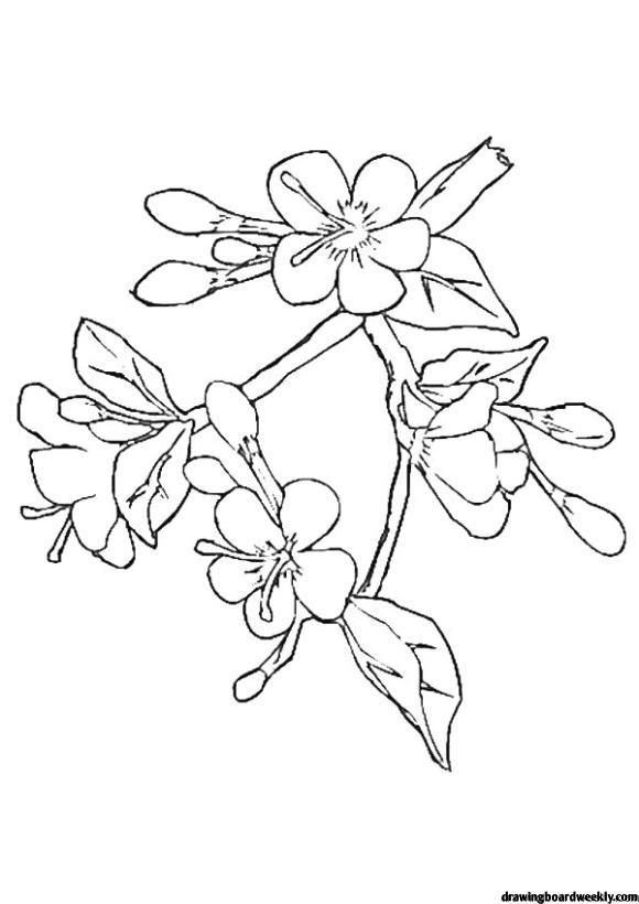 Cherry Blossom Coloring Page In 2020 Cherry Blossom Drawing