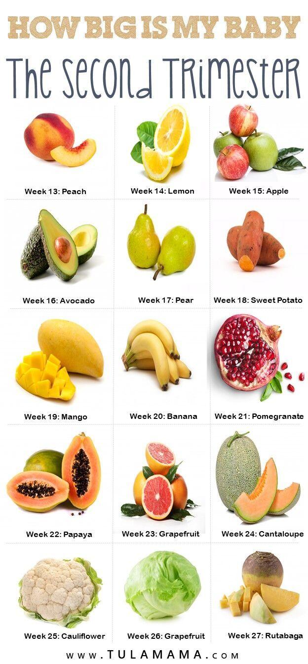 Size Of Baby At 21 Weeks Fruit : weeks, fruit, Tulamama
