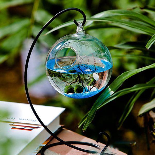 1000 images about garden plants in standing water on for Moss balls for fish tanks