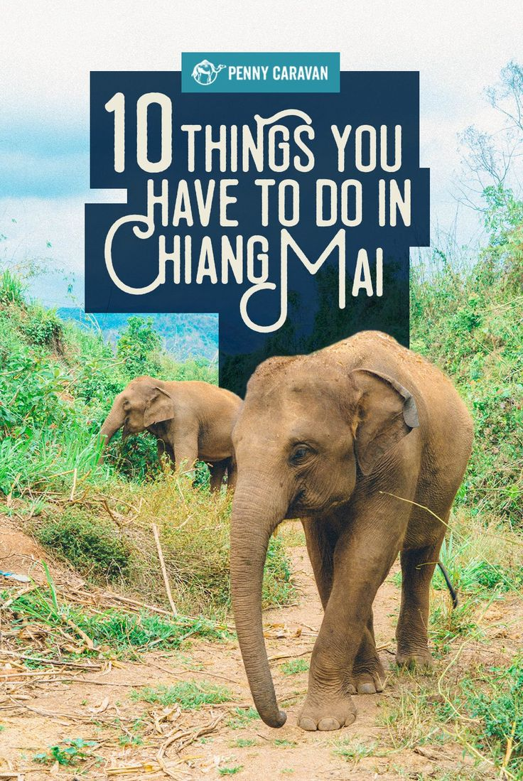 Chiang Mai is about as laid back as Bangkok is busy, but that doesn't mean there isn't anything to do! From temples in the city to elephant camps in the jungle, you'll definitely …